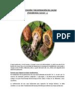 Rehabilitación Cacao Papi