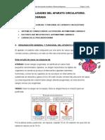 Aparato Circulatorio y Encefalograma