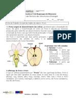 Ficha de Trabalho 12 Estudo Dos Órgãos Da Videira Fruto