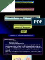 Structura Informationala a Creierului Uman