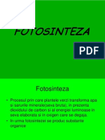 Fotosinteza2