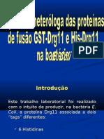 expressao_heterologa_DRG11