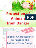 Protection of Animal From Danger