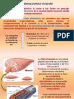 Proteinas Del Músculo