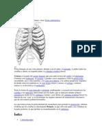Examen Físico del Tórax.docx