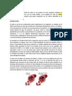 Cuantificacion de Calcio.docx
