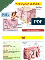 anatomiayfisiologiadelapiel-131114122848-phpapp02