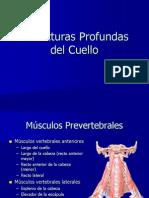 005 Estructuras Profundas Del Cuello