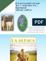 Estres Biotico Abiotico Alpaca y Alfalfa Final