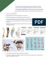 1BT CMC Evolucion y Extincion