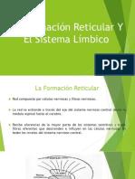 La Formación Reticular Y El Sistema Límbico.pptx