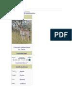 Giraffe2.docx