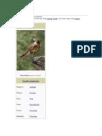 Falcon.docx