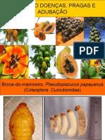 mamoeirodoenaspragaseadubao-110218161756-phpapp01