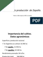 1 T Cnicas de Producci n de Zapallo