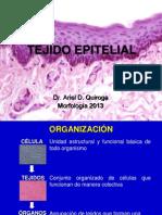 Tejido epitelial 2013