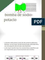Bomba de Sodio-potacio