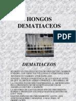 6.DEMATIACEOS