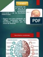 cerebroexpoooo-131115100559-phpapp02