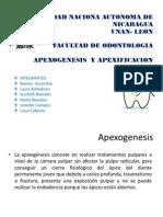 Apexogenesis y Apexificacion