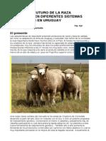 Presente Futuro Raza Corriedale en Diferentes Sistemas Productivos en Uruguay (1)