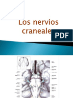 Los_nervios_craneanos.pptx