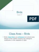 27. Birds (1)