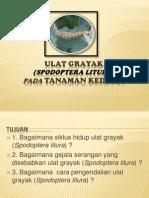 Ulat grayak (Spodoptera litura).pptx