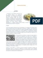 CIENCIAS DE LA SALUD HISTORIA DE LOS HOSPITALES.doc