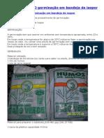 Germinação de Sementes em Bandeja de Isopor Passo a Passo.pdf