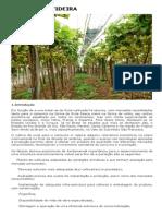 Cultura da Videira.pdf