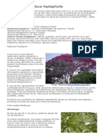 Tabebuia heptaphylla (Ipê-Roxo).pdf