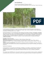 Seringueira - Hevea brasiliensis.pdf