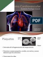 Sistema Cardiovascular Ayudantia
