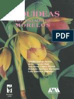 Orquideas Mexico