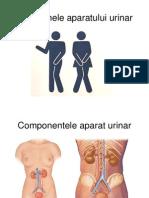 Simptomele Aparatului Urinar2013_Final