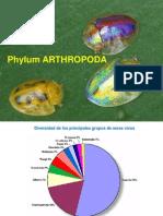 Artrópodos Clase I 2013