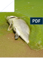 2014 Toxic Algae State Survey