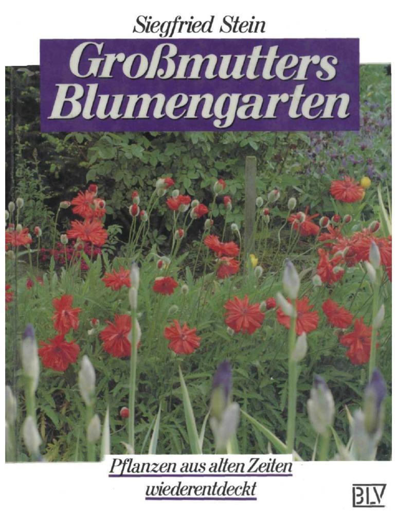 Primel vulgaris übliche Primel Wildblumen Blumen 100 Samen