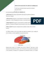 Semana 3. Tema 1 Lóbulo Cerebral Frontal, Occipital, Lóbulo Cerebral Parietales y Temporales (PDF),Funcionalidad y Disfuncionalidad de Los Lóbulos Cer