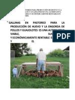 Gallinas en Pastoreo Para Producción de Huevo y La Engorda de Pollos y Guajolotes Es Una Alternativa Viable