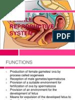 femalereproductivesystemedited-111001090609-phpapp02