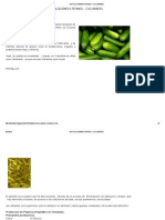 Data & Business Pepinos - Cucumbers