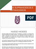 Musculos Suprahioideos e Infrahioideos1