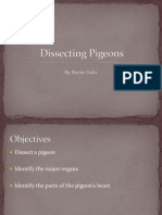 Dissecting Pigeons