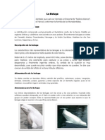 La Beluga.docx