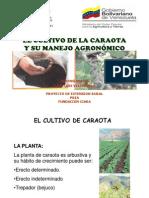 El Cultivo de CARAOTA