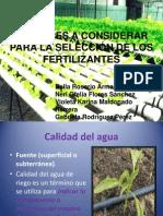 Periodo vegetativo arandano