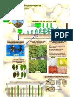 Mecanismo de acción de los fosfitos