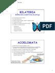 6-Acoelomata, Blastocoelomata